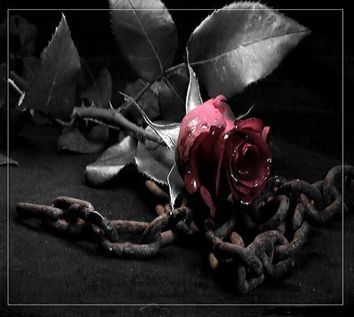 http://parsiblog.com/PhotoAlbum//MRdeltang/lovenice(2).jpg