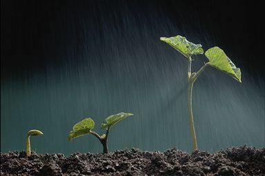 باران رحمت
